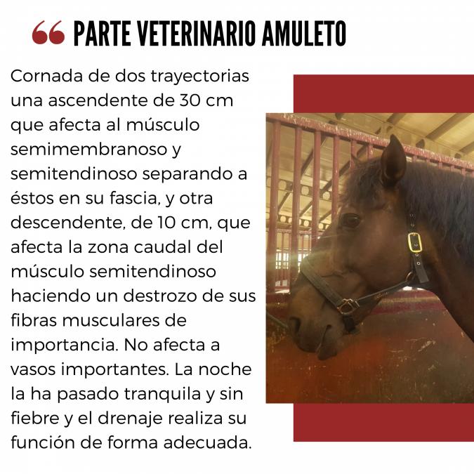 Amuleto, herido en El Puerto